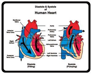 Systolic Diastolic