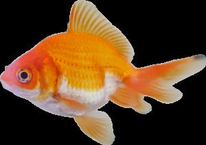 FISH SHAPED