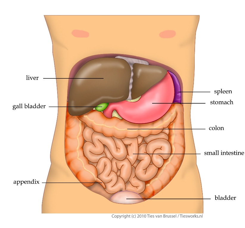 common causes of abdominal pain abdominal emergencies