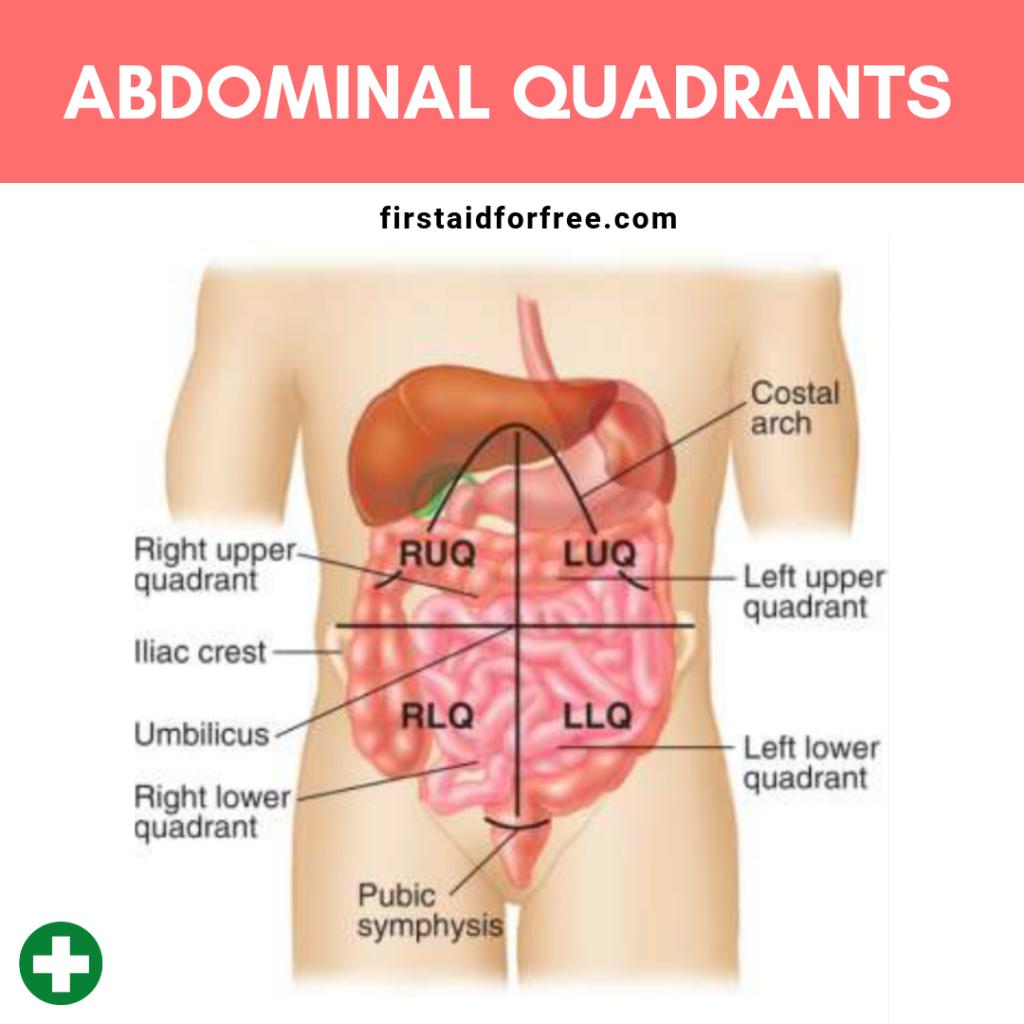 What Are The Four Quadrants Of The Abdomen